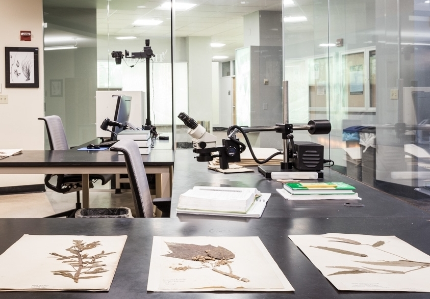 Brown University Herbarium