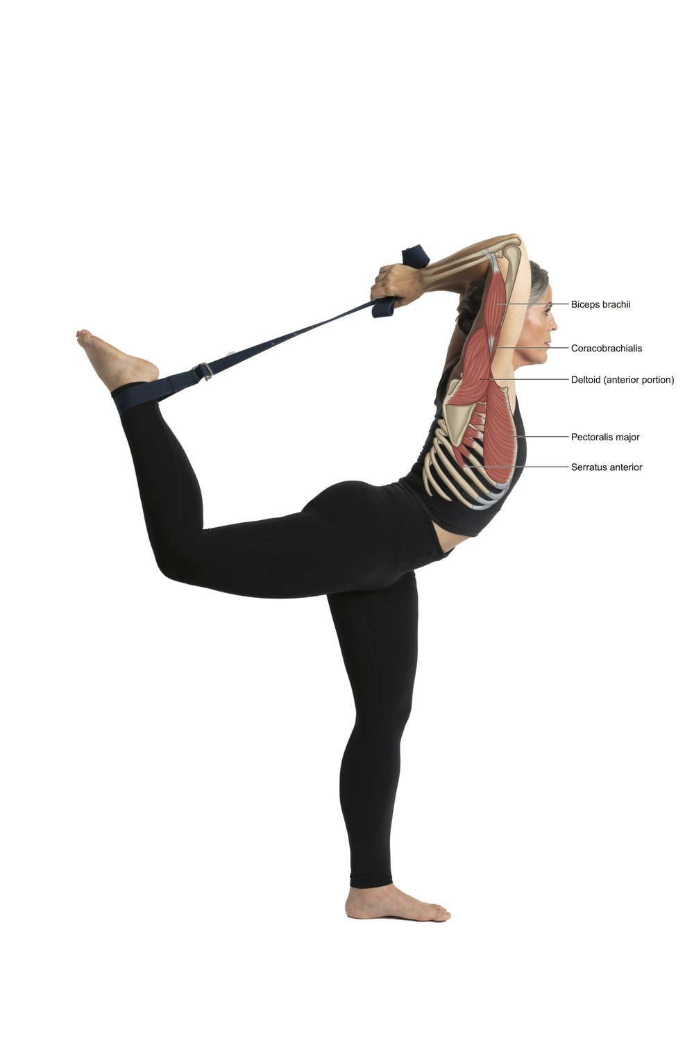 Figure 16_Shoulder flexion in dancer.jpg