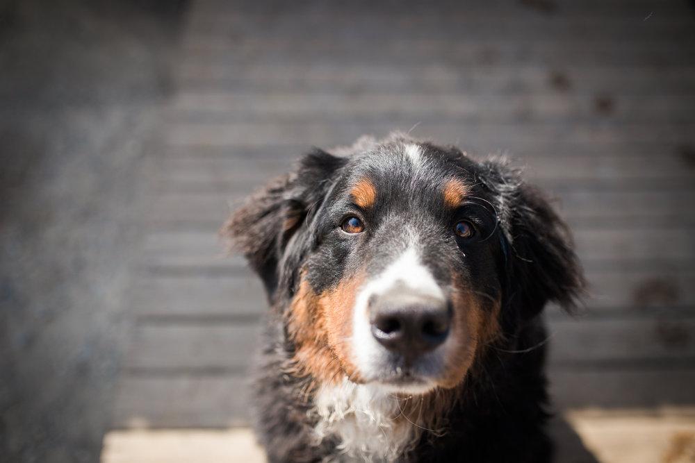 Barking-Good-Dogs-24.jpg