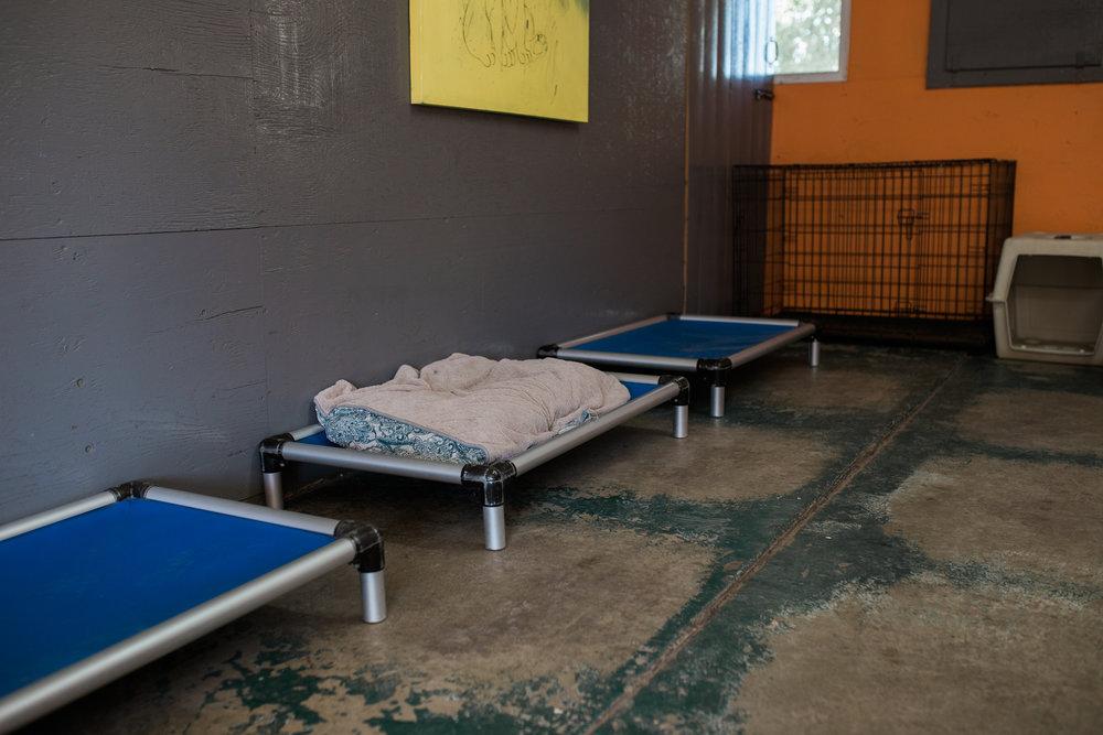 BarkingGood-Facility-30.jpg