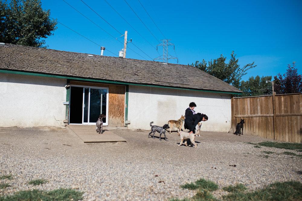 BarkingGood-Facility-32.jpg