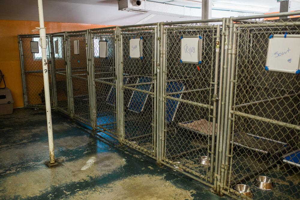 BarkingGood-Facility-25.jpg