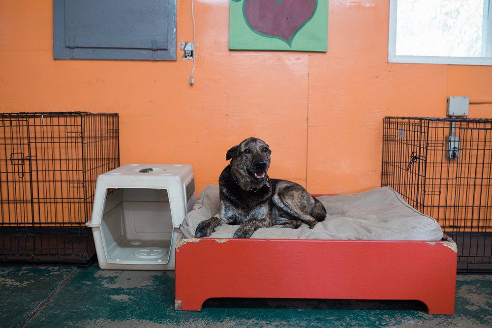 BarkingGood-Facility-31.jpg