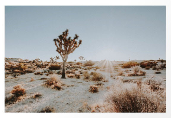 Joshua Tree Art Print by Desert Daze