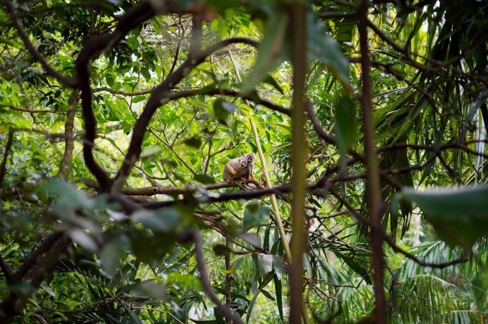 Monkey Jungle Dominican Republic