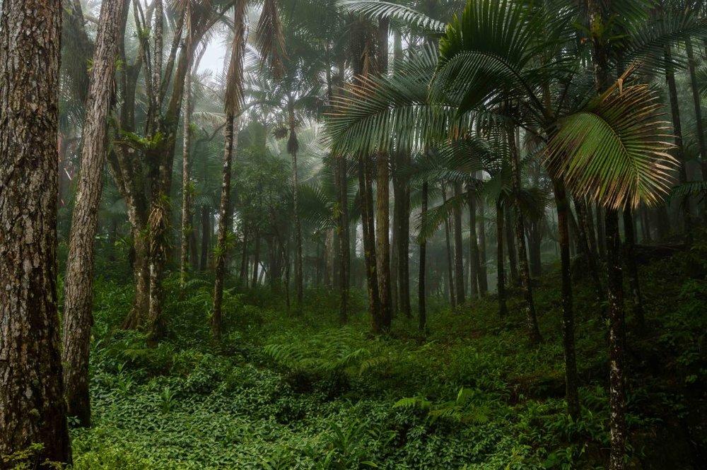 rain forest hike dominican republic