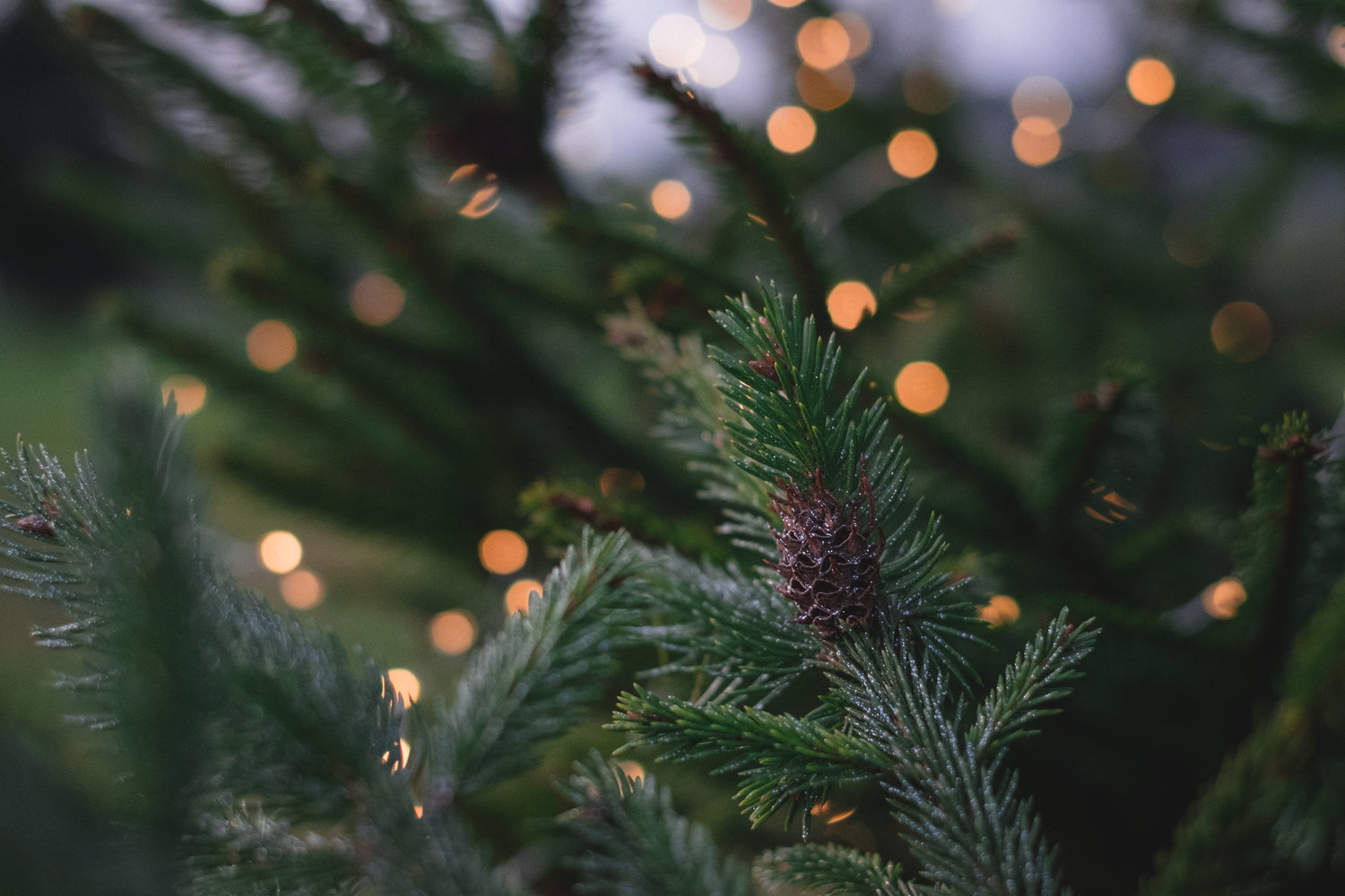 Christmas Tree Farms In Snohomish Your Snohomish County Realtor