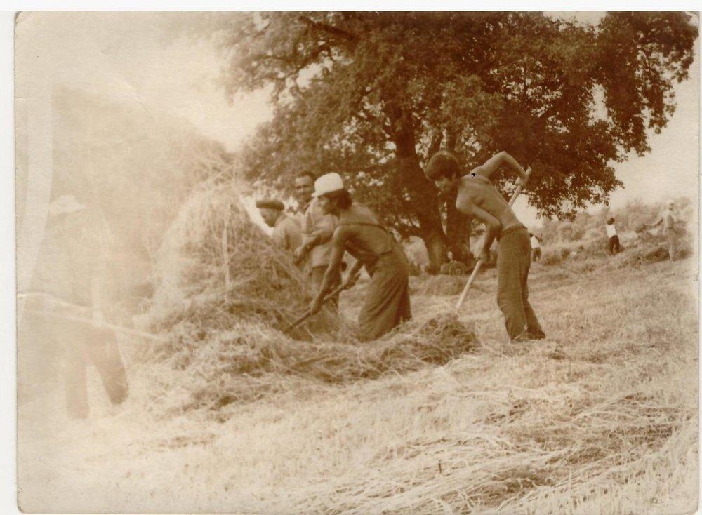 "Dad doing his ""Kalchoz"" - Communist land duties"