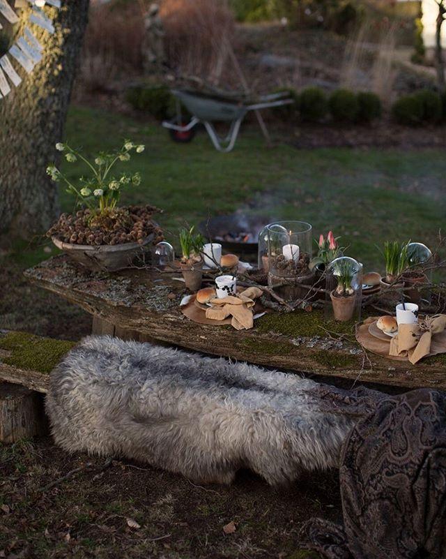 Vår i hagen. Nydelige vårbilder og enkle hagetips fra @ingunnshage på bloggen vår. www.guroogmonings.no. Ha en fantastisk fin skjærtorsdag der du er. God klem fra oss #vårihagen #hageblogg #hageliv #hage #garden #vår #påske #borddekking #tablescapes #guroogmonngs #spring #garden #vårblomster #vårstemning #vårkänsla #vårblommor #hageinspirasjon #hageliv #hageglede