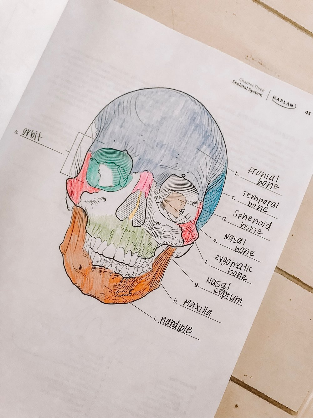 Anatomy Coloring Book Page.jpg