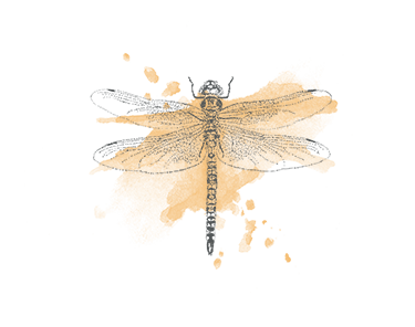 Dragonfly illustration - sRGB@0,75x.png