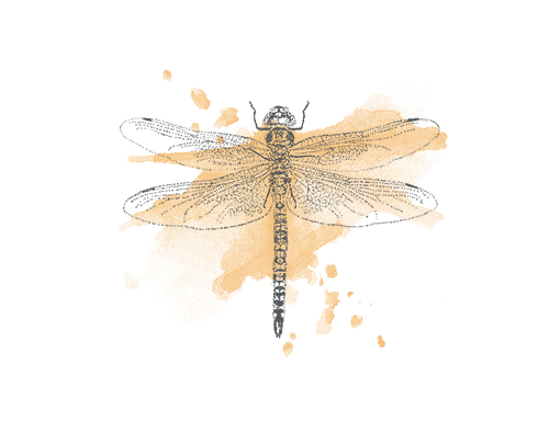 Dragonfly illustration - sRGB.png