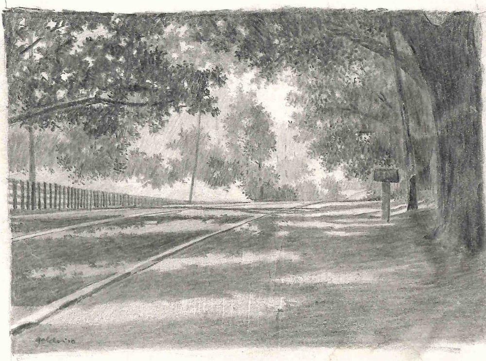 Canopy of Oaks (2010)