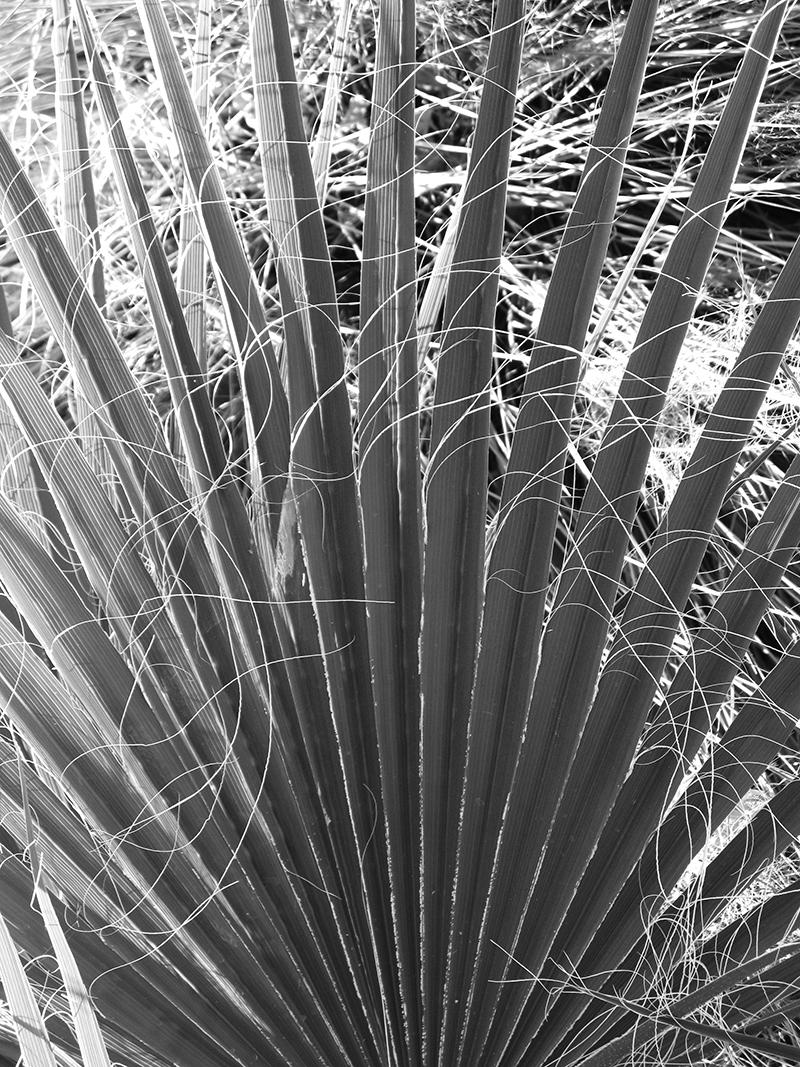 Palm - # 1/25