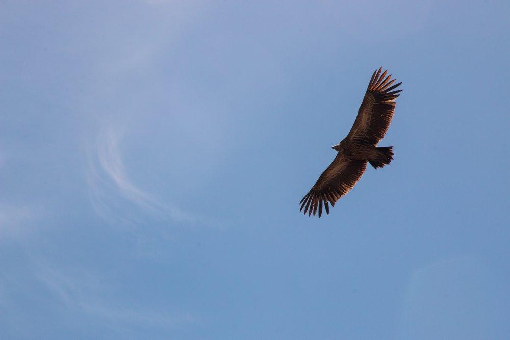animal-avian-bird-897719.jpg