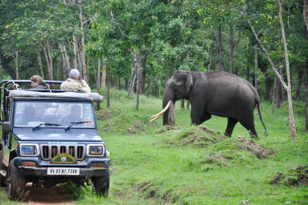 Bandipur_Elephant_1.jpg