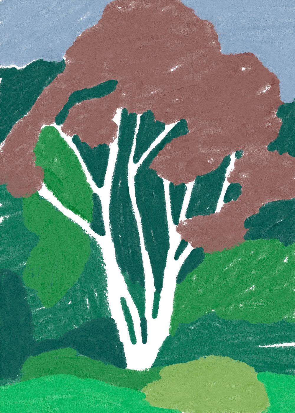 charlottetrounce_treesofsanfran2.jpg