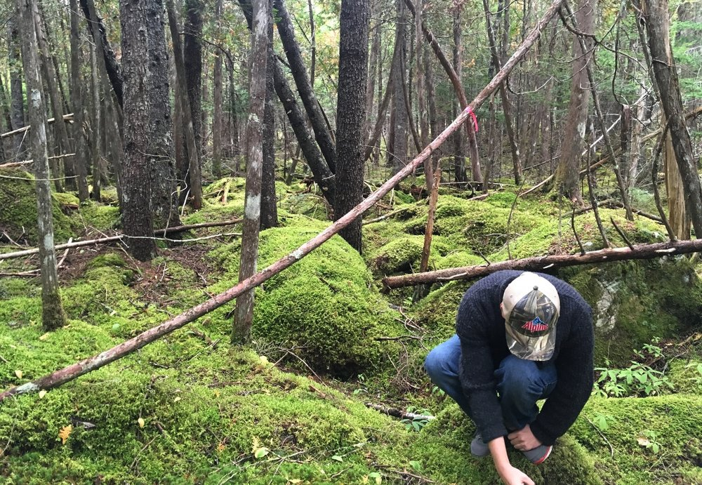 Hunting for mushrooms near St. Patrick's Falls