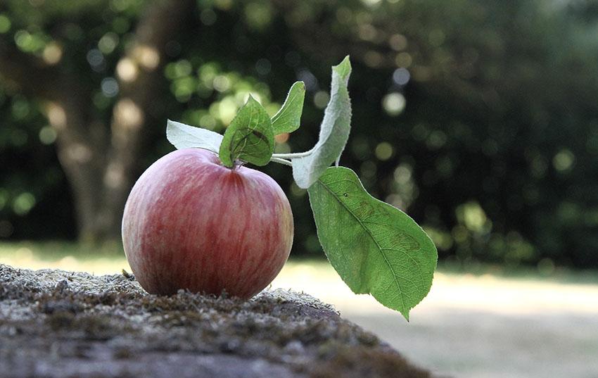 Apple 30cm.jpg