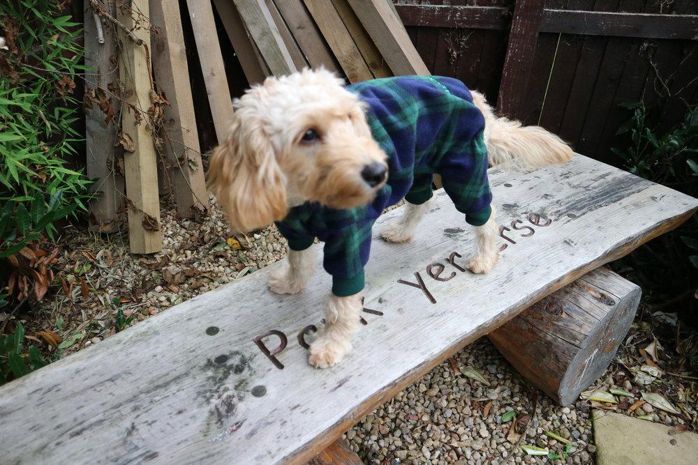 Mucki Mutz Dog Coat