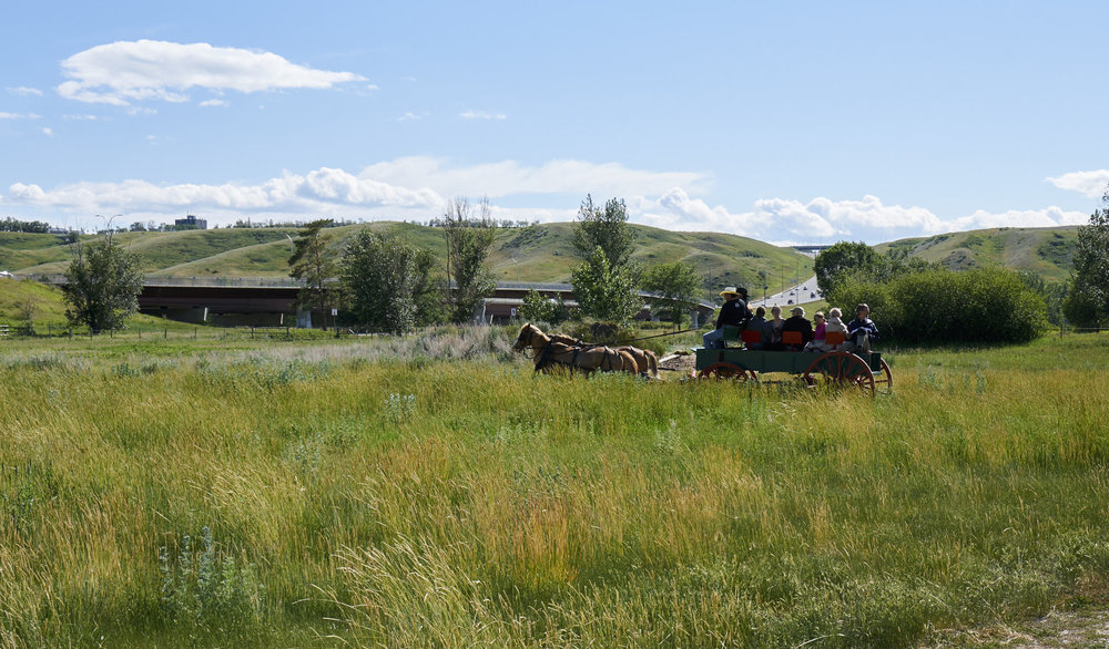 Wagon rides - Explore Indian Battle Park by horse-drawn carriage. Wagon rides are an additional $50 per class.