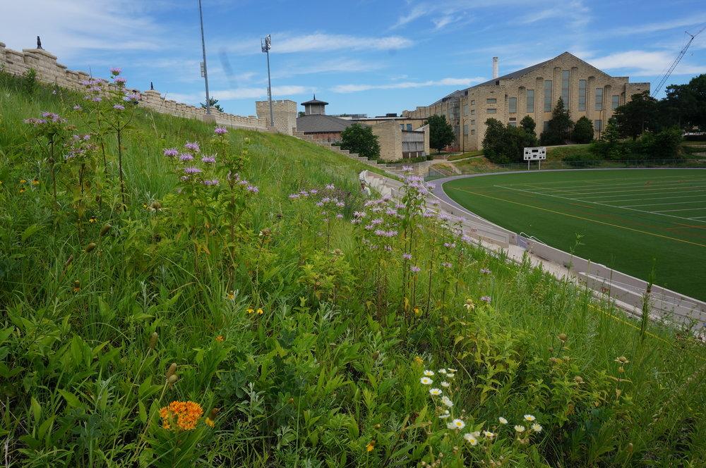 University of Kansas Memorial Stadium Green Roof Manhattan.JPG