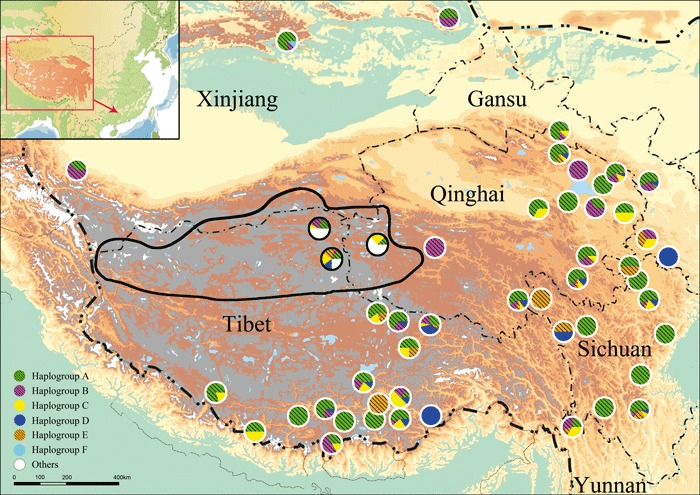 Geographical-distribution-of-the-yak-Bos-grunniens-D-loop-haplogroups-in-western-China.png.jpeg
