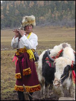 20080229-Tibetan+herder+and+yak+in+Yunnan+NP+22.jpg