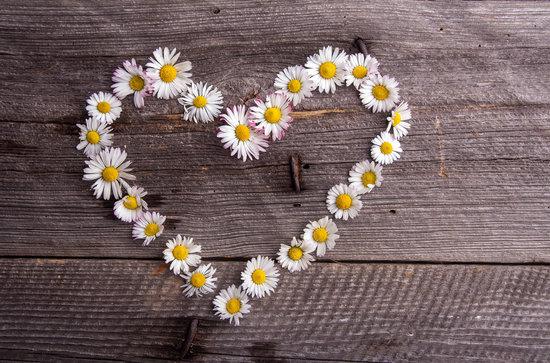 canva-white-daisies-heart-shape--MABbXZAHDvg.jpg