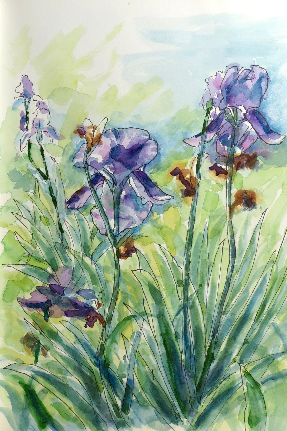 Irises at Weir Farm