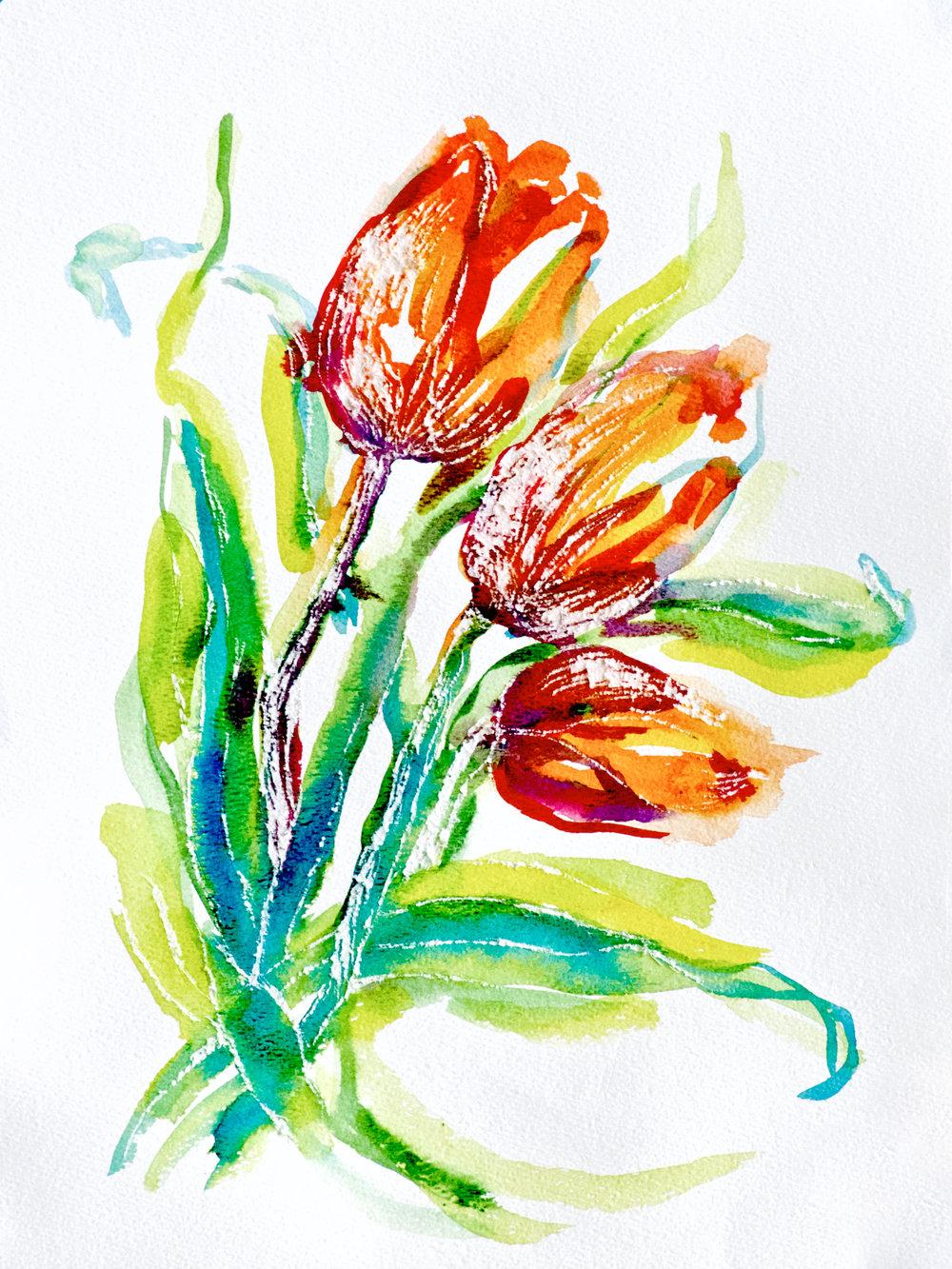 Orange Tulips Bowing