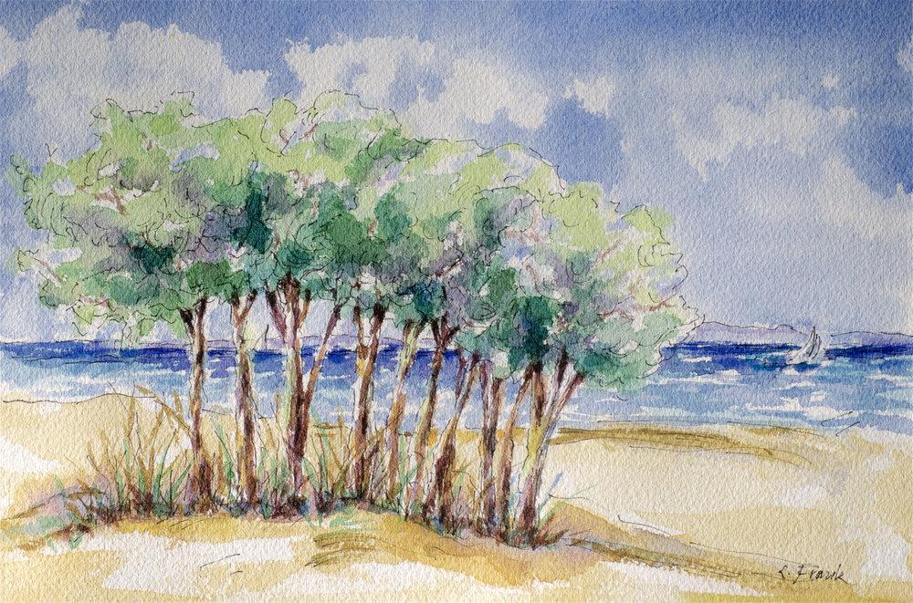 Tree Gathering, Compo Beach