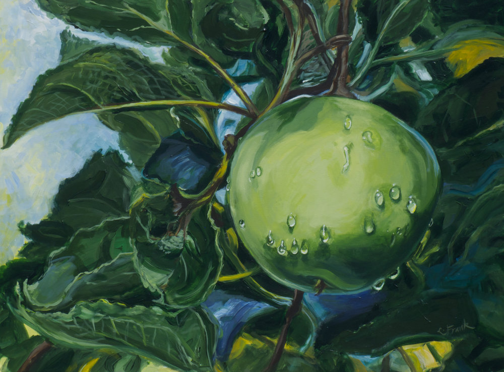 Apple with Raindrops, Weir Farm