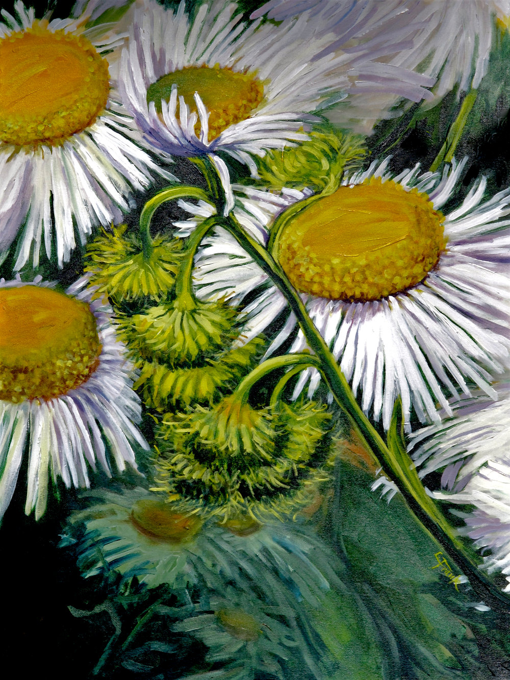 Wild Daisies, Outer Island