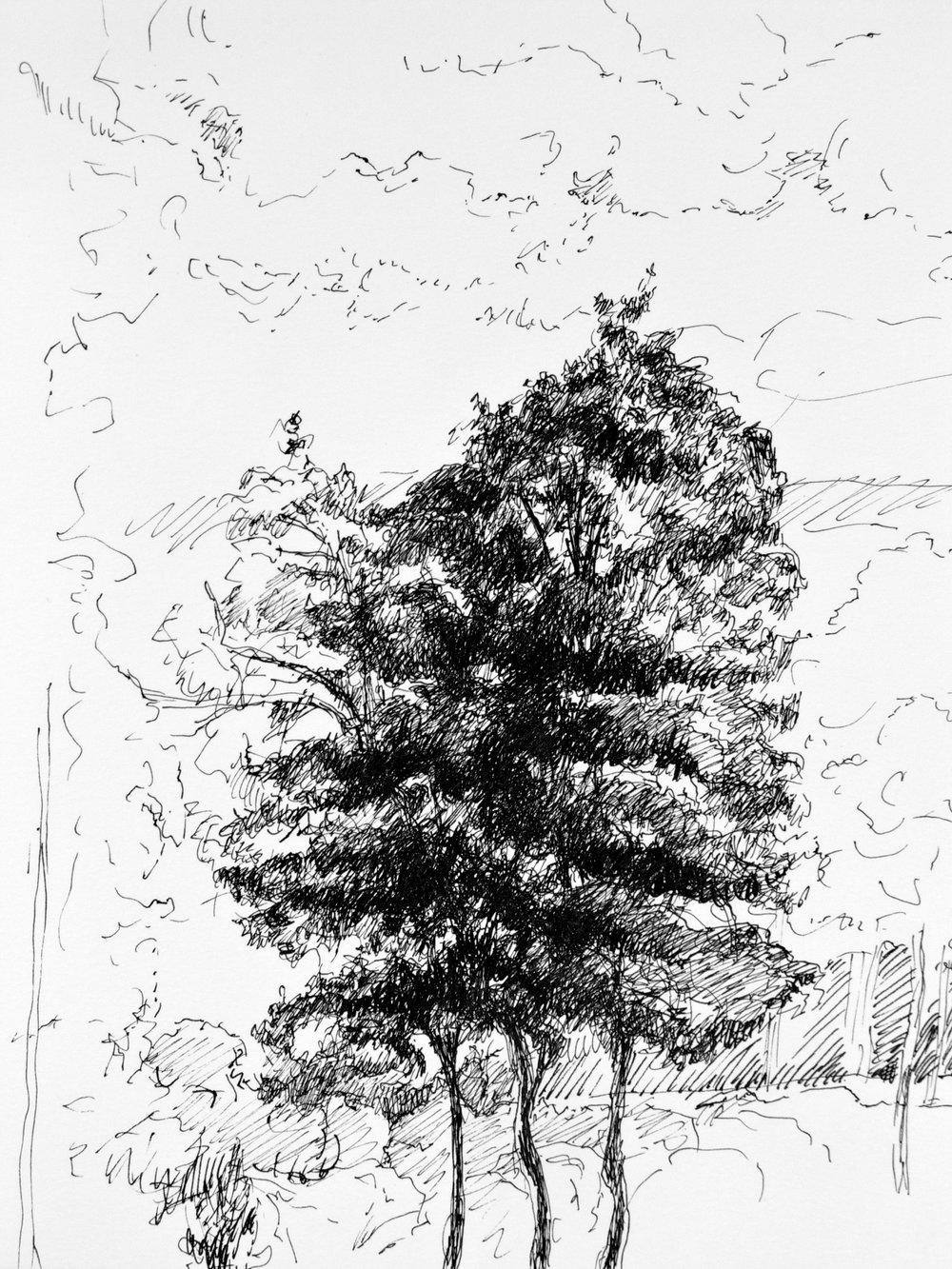 Trees at Longshore