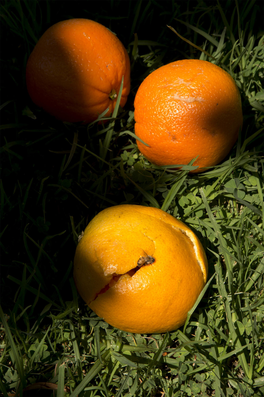 Fallen Oranges