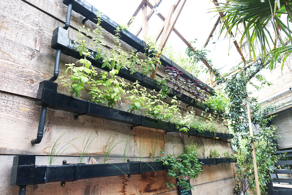 - HYDROPONIC HERB WALL - JIM and TONIC