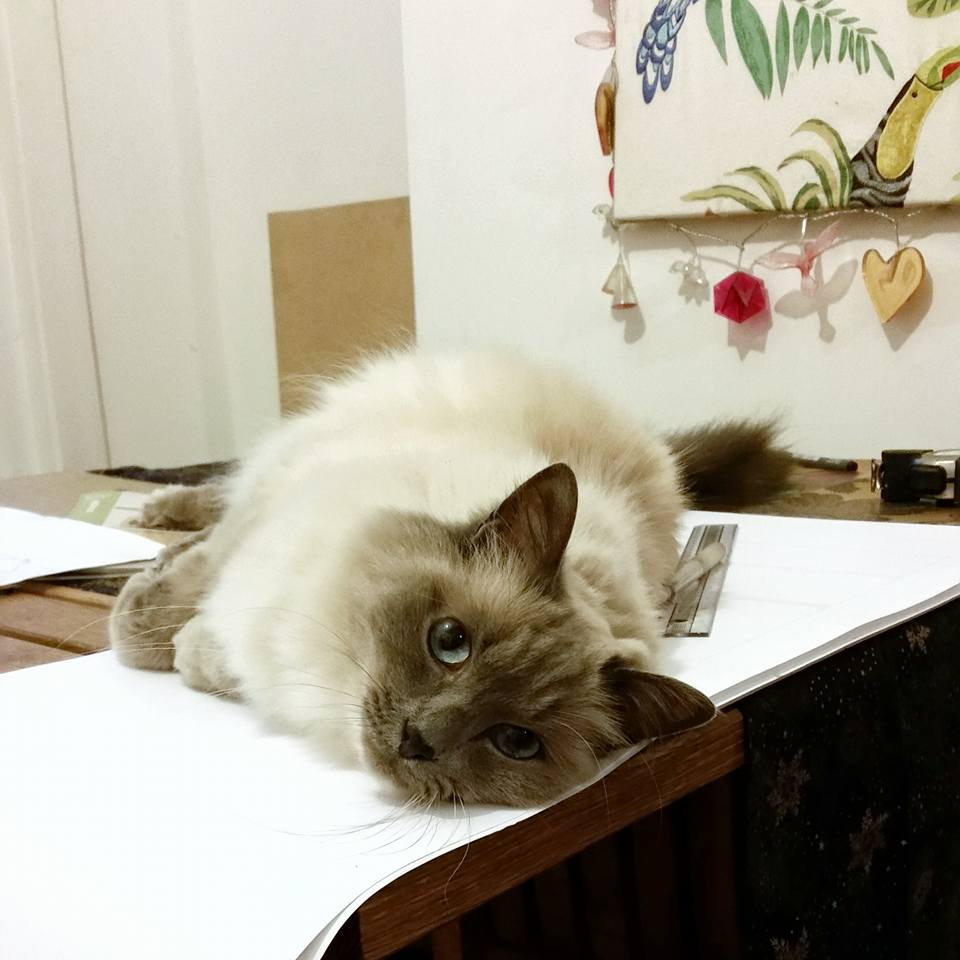 Kitchen design not helped by cat
