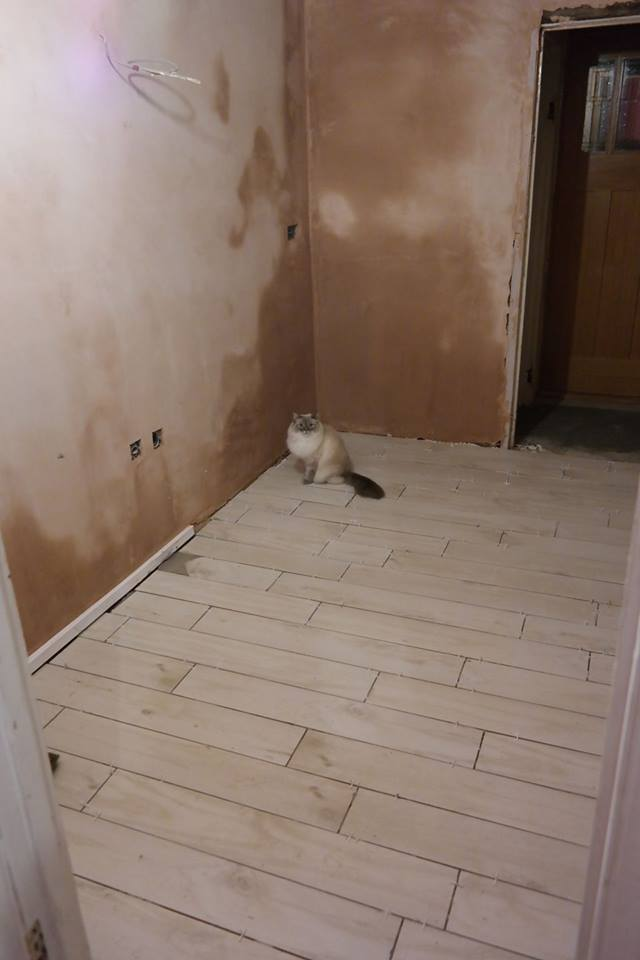 Kitchen renovation work in progress with cat