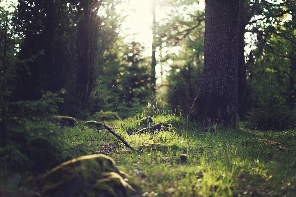 creativity-forest.jpg
