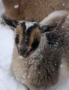 Anna Gunderson and Her Goats - A Pet Spotlight