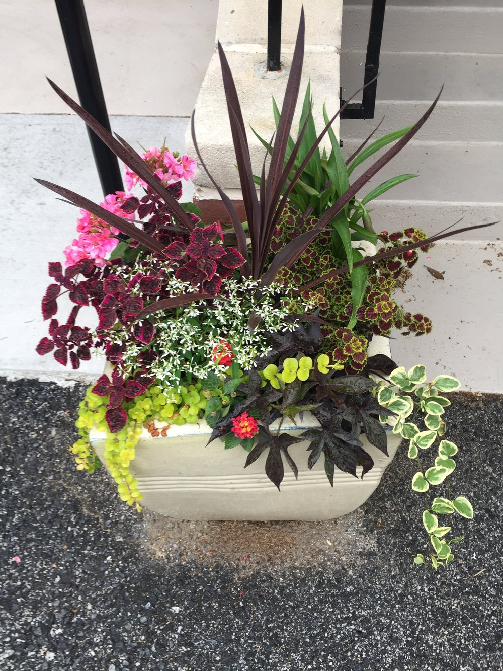 We love making container gardens.