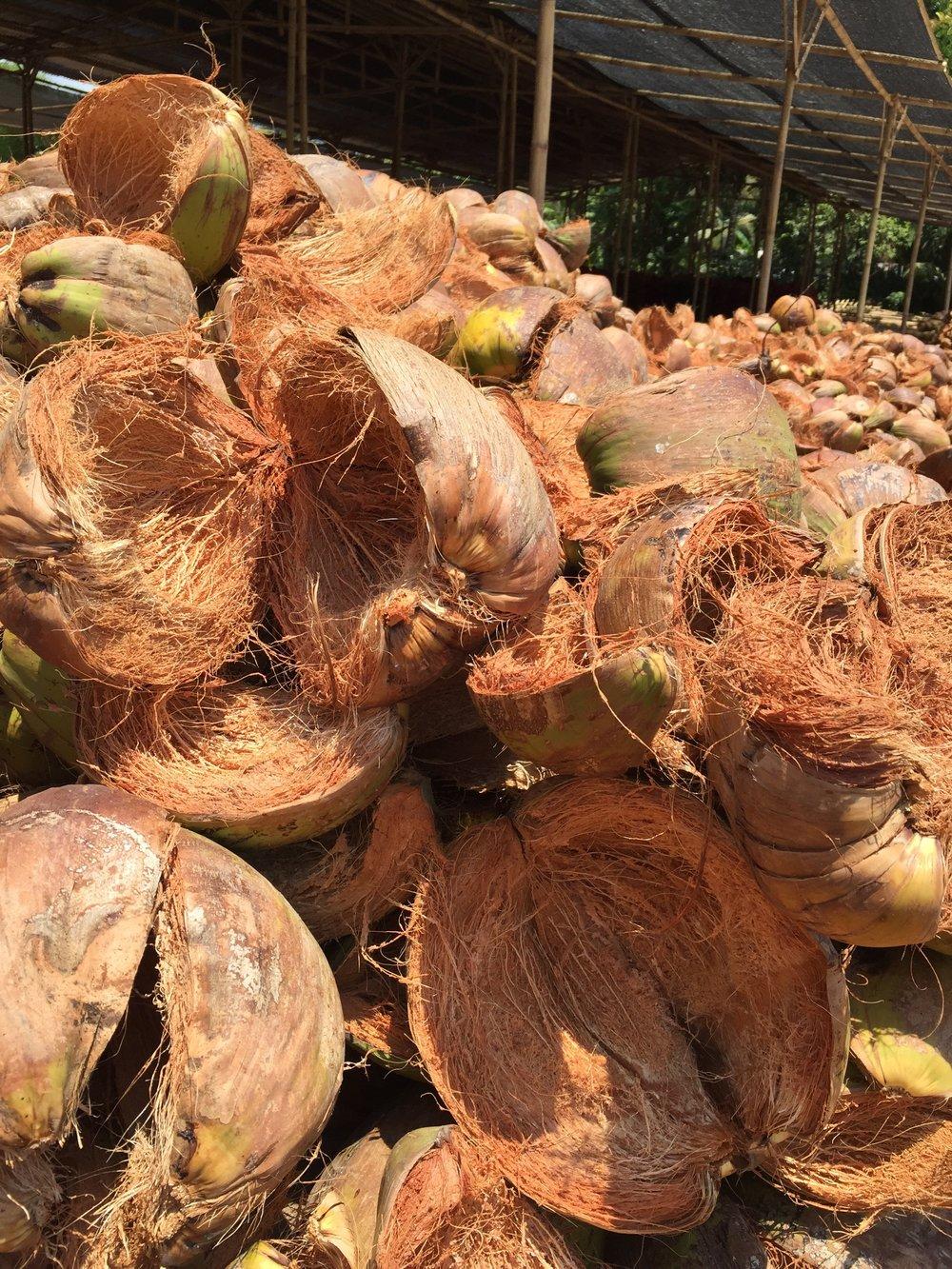Noix de coco - La coque de la noix de coco, un déchet pour l'industrie agroalimentaire mais une ressource pour la société GOODHOUT