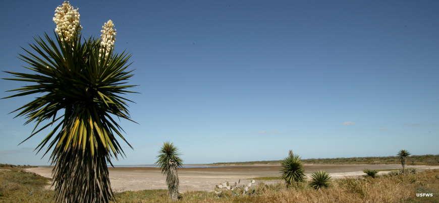 laguna-atascosa-yucca001.jpg