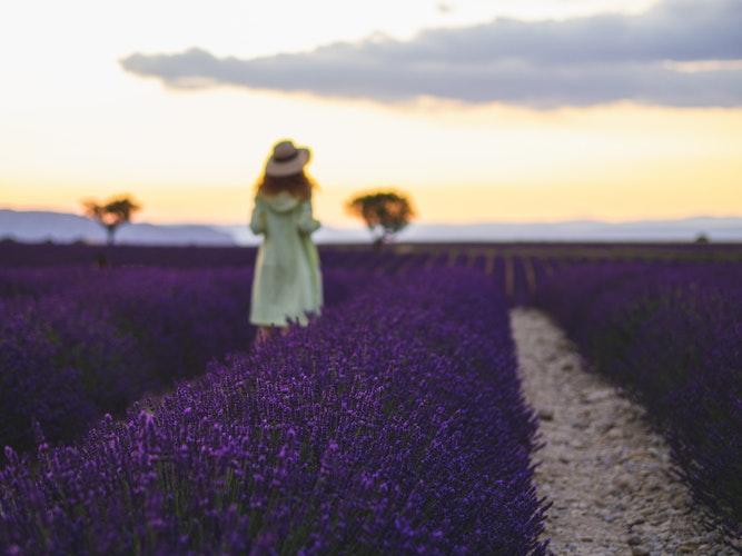 lavenderfields_Arthur Aldyrkhanov_unsplash.jpeg
