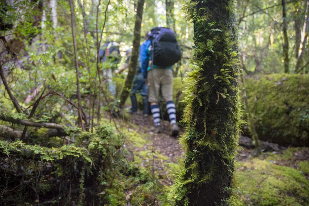Tarkine Trails Rainforest Walk
