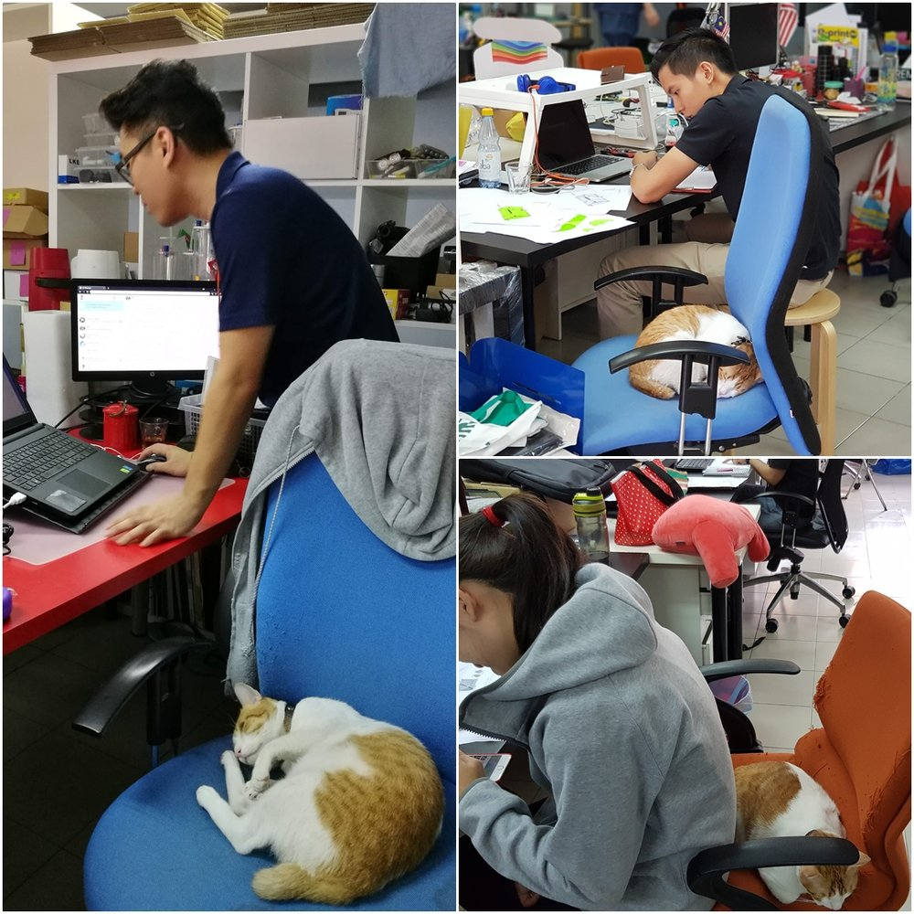 """""""It's funny how some people sacrifice their space for the cats to get their afternoon naps."""""""