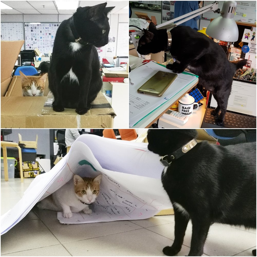"""""""They like to push things off your table, leaving fur and paw prints all over your chair and desk and sometimes destroy things within their reach."""""""