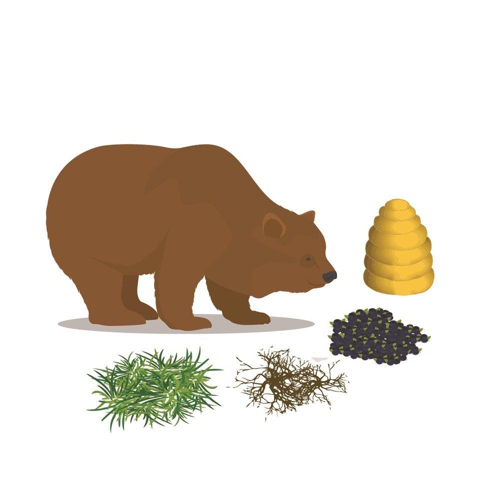 bear necessities bear branded