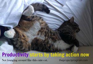 https_%2F%2Fblogs-images.forbes.com%2Fwork-in-progress%2Ffiles%2F2013%2F01%2FCute-Cat-Project-Program15.jpg